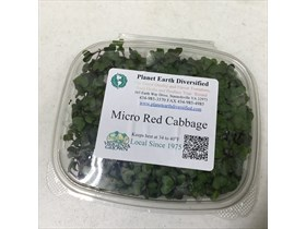 Micro Red Cabbage