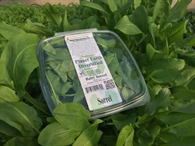 Baby Green Sorrel box